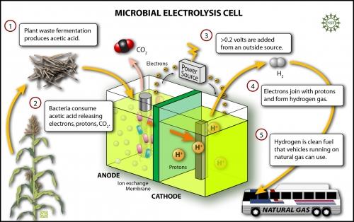 biohydrogen_h.jpg